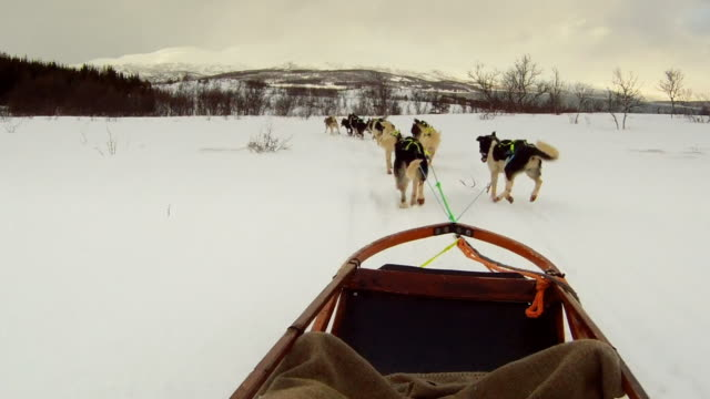 dog sled 6b - sledge stock videos & royalty-free footage