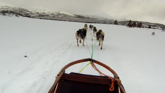 dog sled 9