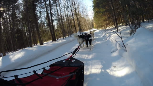 POV of dog sled on trail in forest
