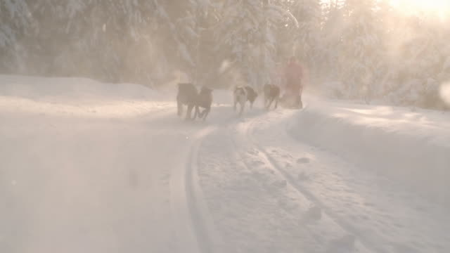 Dog sled riding through snow-covered forest