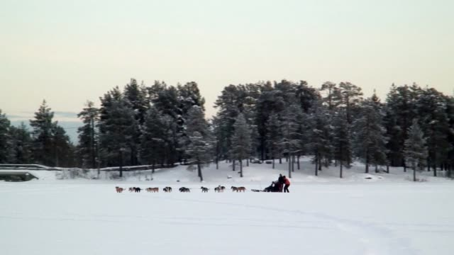 A dog sled team pulls riders through a snowy field.