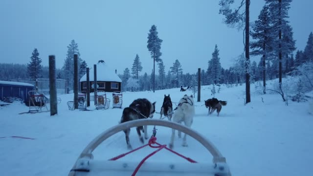 dog sledding at finland during winter from first person point of view