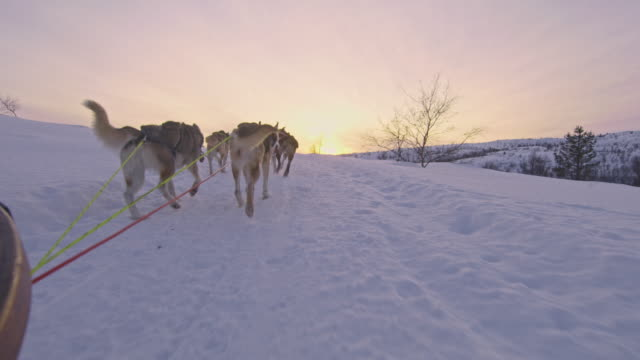 pov dog sledding at sunset in norway - husky stock videos & royalty-free footage