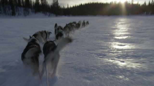 POV, Dog sledding, Hemsedal, Norway