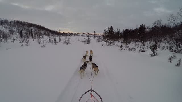 POV of Dog sledding in Arctic Norway