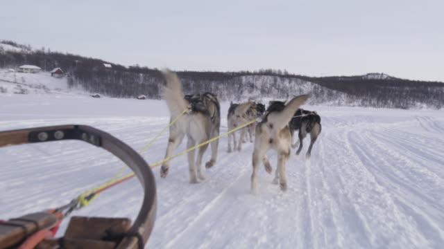 pov dog sledding in norway - sled dog stock videos & royalty-free footage
