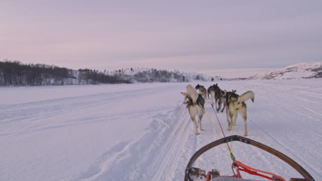 POV Dog sledding in Norway