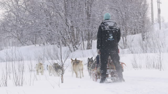 slo mo dog sledding in norway - northern europe stock videos & royalty-free footage