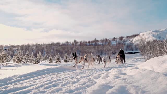 slo mo 犬ノルウェーのそり - 引く点の映像素材/bロール