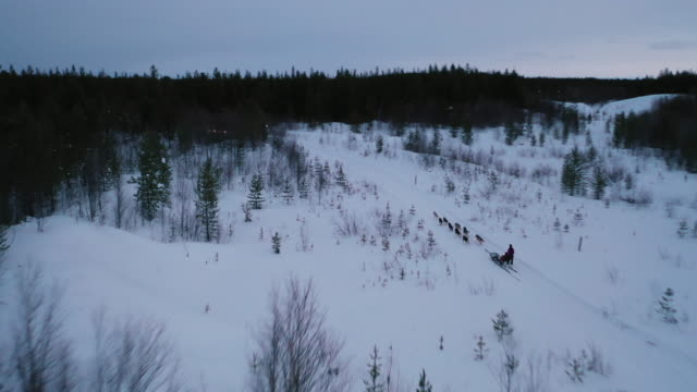 dog sledding on deep snow forest in aerial view - sledge stock videos & royalty-free footage