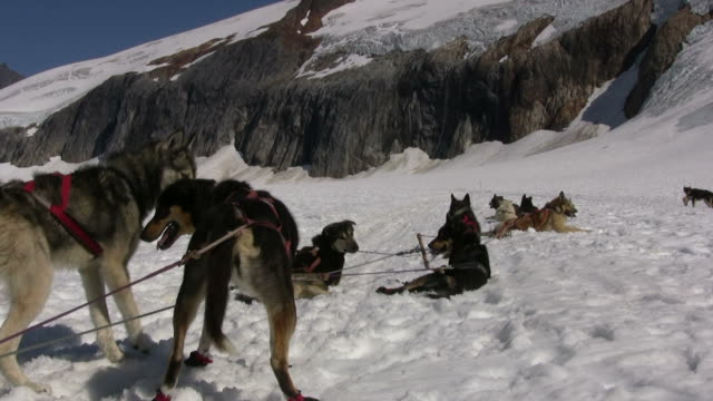 dog sledding - rest time 2 - medium group of animals stock videos & royalty-free footage