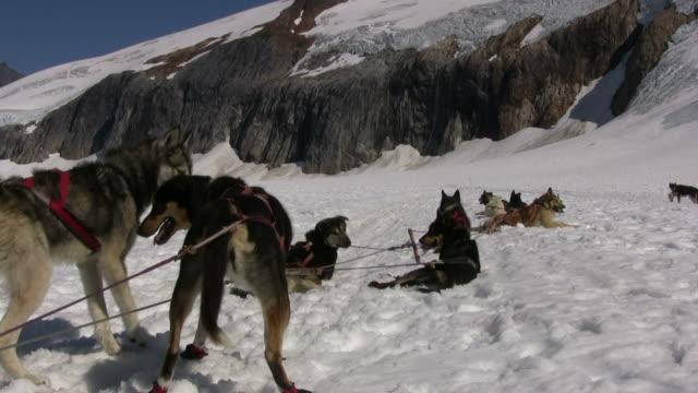 Dog Sledding - Rest Time 2