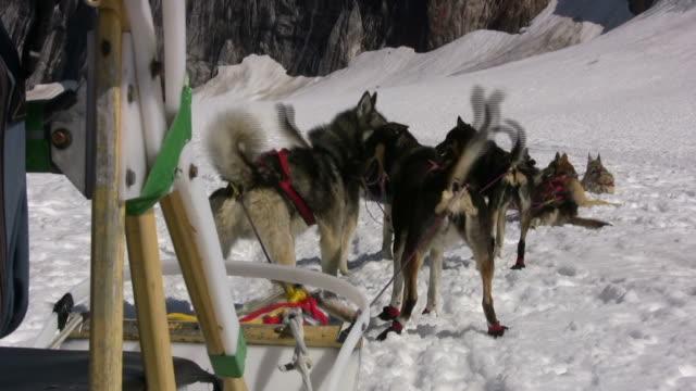 Dog Sledding - Rest Time