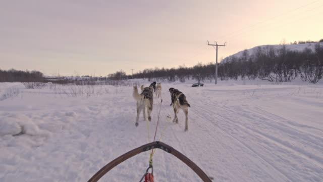 POV Dog sledding somewhere in far northeastern Norway