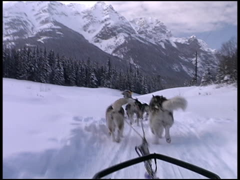 dog sledding through snow - banff stock videos & royalty-free footage