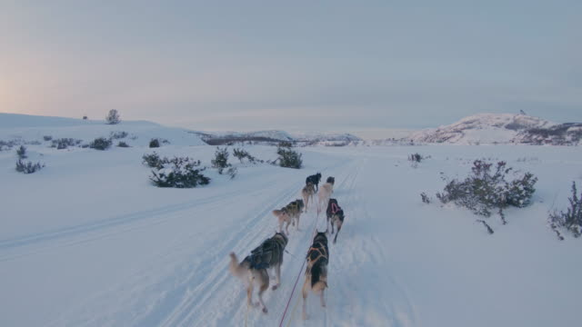 SLO MO POV Dog sledding through the snow at sunset