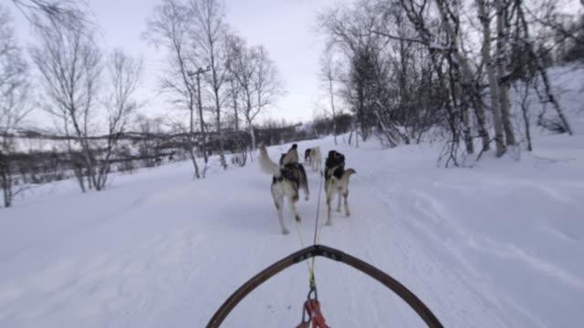 pov dog sledding through the snow in norway - scivolare video stock e b–roll