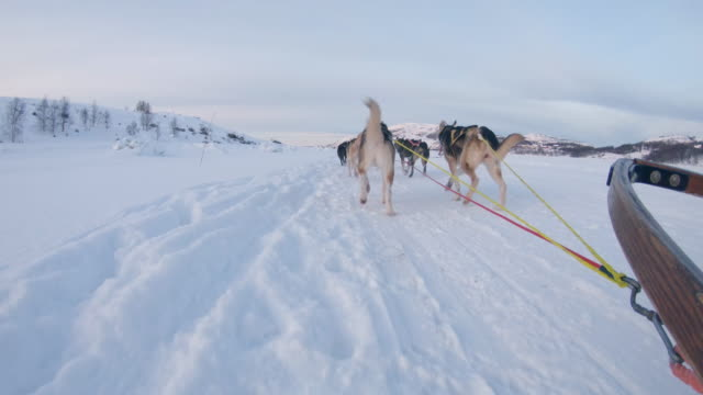 POV Dog sledding through the snow in Norway