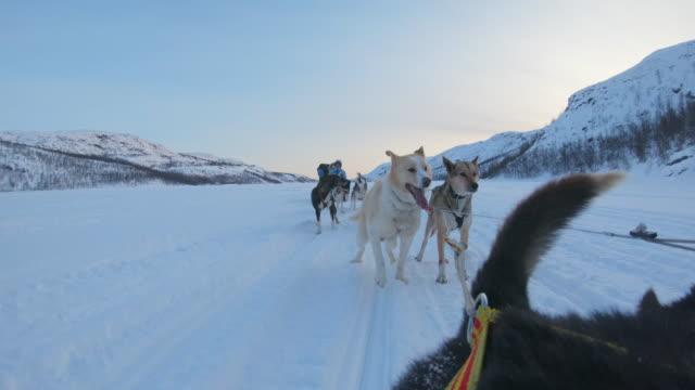POV Dog sledding through the snow in Norway