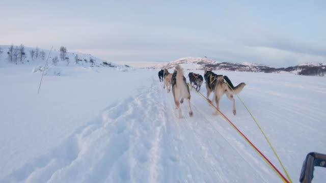 SLO MO POV Dog sledding through the snow in Norway