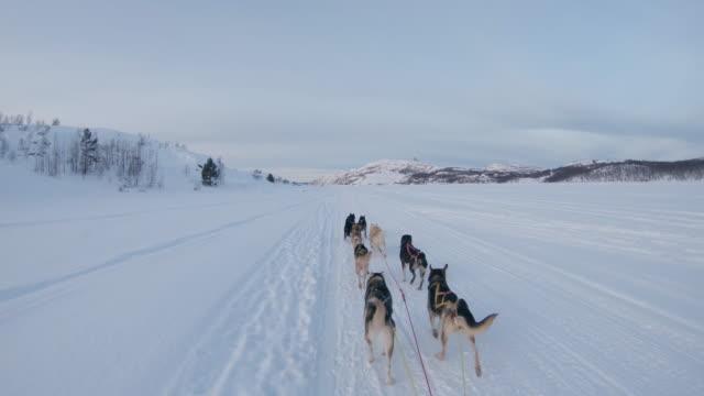 pov dog sledding through the snow - sled dog stock videos & royalty-free footage