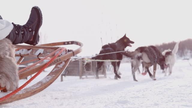 slo mo dog sledding through the snow - pulling stock videos & royalty-free footage