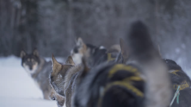 dog sledding - dramatic landscape stock videos and b-roll footage