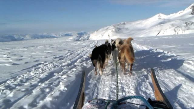 POV Dog sledge crossing frozen sea near Tasiilaq, East Greenland