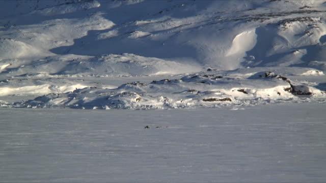 ws zi dog sledge crossing frozen sea, snow covered mountain in background, tasiilaq, east greenland - peter snow bildbanksvideor och videomaterial från bakom kulisserna