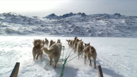 vidéos et rushes de pov dog sledge on arctic snow near tiniteqilaaq, east greenland - chien de traîneau