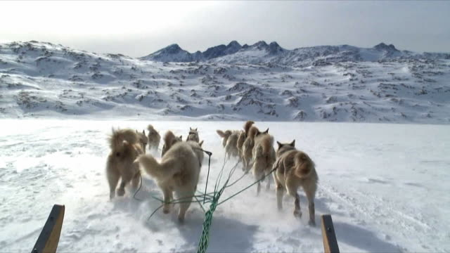 POV Dog sledge on Arctic snow near Tiniteqilaaq, East Greenland