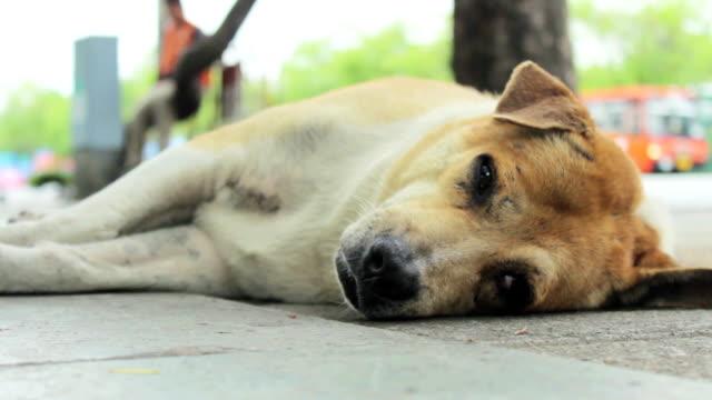 vídeos de stock e filmes b-roll de cão de sono - ausência