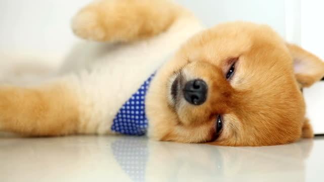 dog sleeping in home