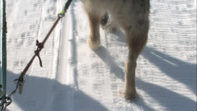 dog sleighs dashing through the snowfield - paw print stock videos & royalty-free footage