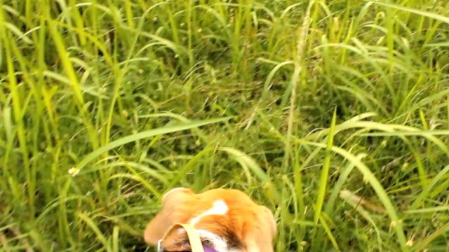 vídeos de stock, filmes e b-roll de nariz de cão com o proprietário - coleira de pescoço de cachorro