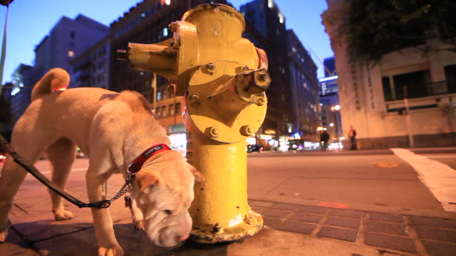 dog sniffing yellow fire hydrant then camera lens - fire hydrant stock videos & royalty-free footage