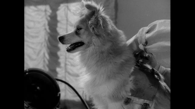 dog subjected to centrifuge experiment for soviet space program - 1950 1959 stock videos & royalty-free footage