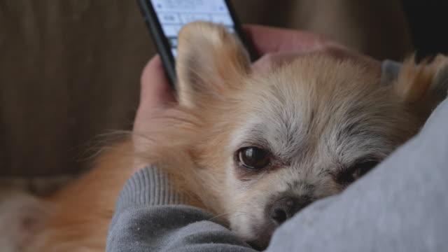 vidéos et rushes de un chien qui se détend tout en étant embrassé par une femme à l'intérieur. - faire fonctionner
