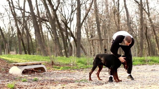 vídeos de stock, filmes e b-roll de cachorro trainer fazendo exercício com doberman pinscher. - treinador