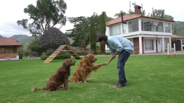 dog trainer teaching the dogs to give the hand - retriever stock videos & royalty-free footage