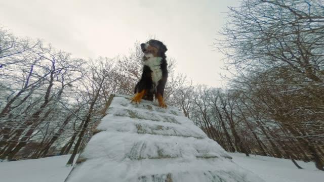 hundetraining für die übergabe von treppen auf dem schnee im winter park - tierisches haar stock-videos und b-roll-filmmaterial