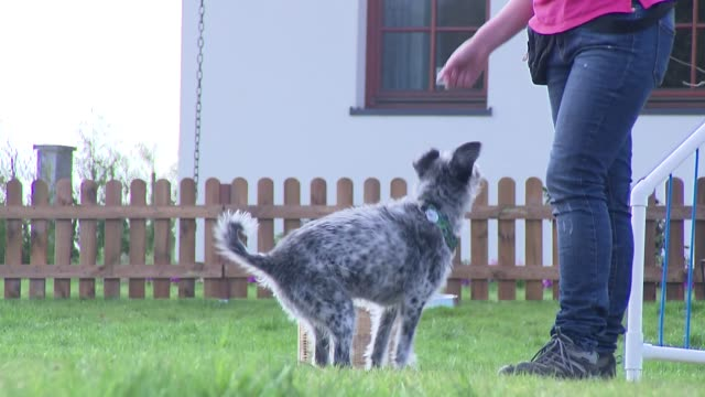 dog training - obedience stock videos & royalty-free footage