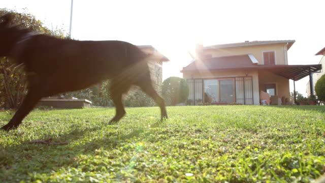 Hund Training