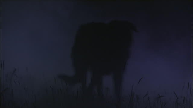 a dog trots through a foggy field at night. - domestic animals stock videos & royalty-free footage