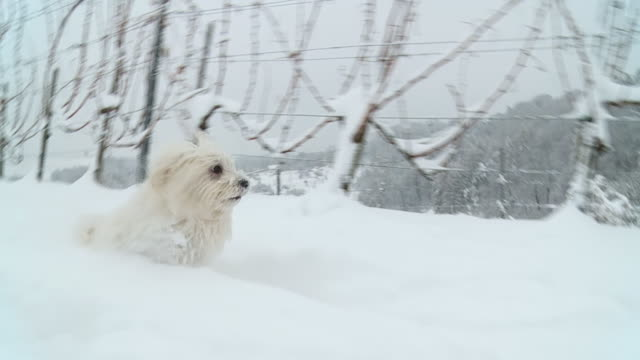 HD SLOW MOTION: Dog Trudging Through The Snow