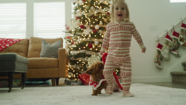vídeos y material grabado en eventos de stock de dog tugging on blanket that baby girl is holding on christmas / vineyard, utah, united states - árbol de navidad