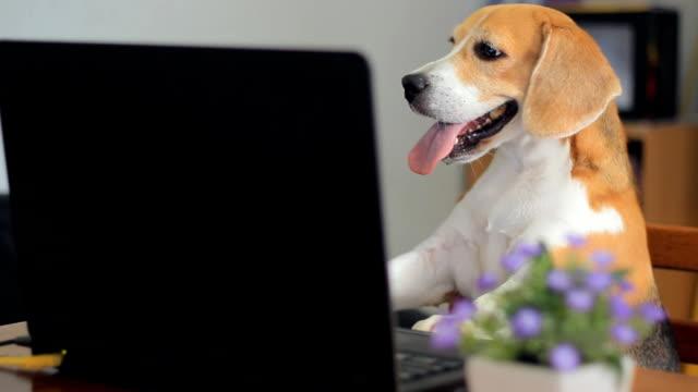 Cão usando laptop
