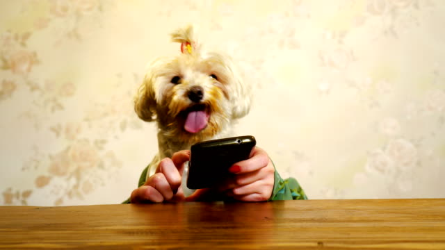 dog using smart phone - piacere video stock e b–roll