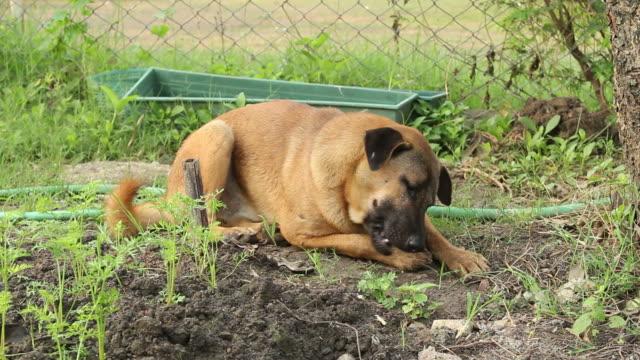 dog - animal vertebra stock videos and b-roll footage