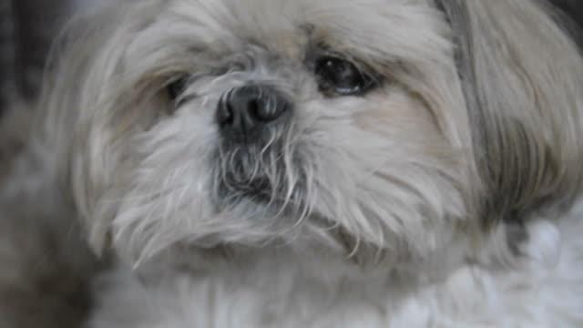 vídeos de stock, filmes e b-roll de cachorro - bigode de animal